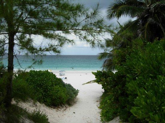 Pink Sands Beach : Pink Sand Beach
