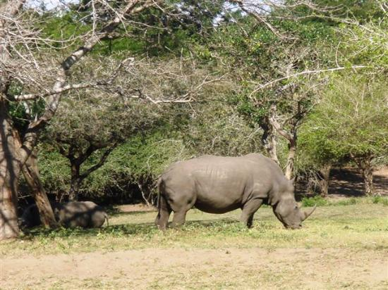 Falaza Game Park & Spa: rhino in our front garden