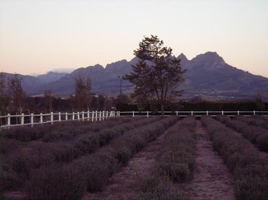 Lyngrove Wines and Guesthouse: Heather garden at sunset