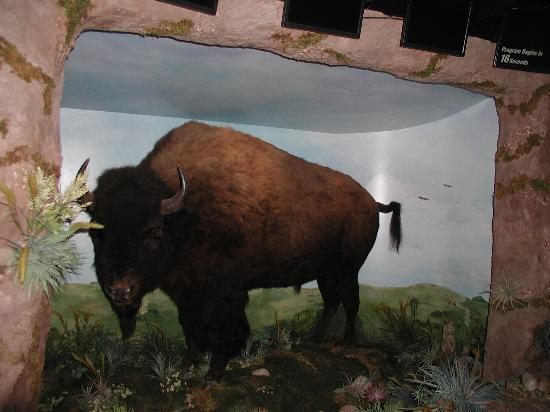 Boot Hill Museum: Buffalo Stampede!