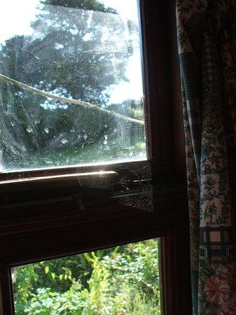 Rosuick Farm: cobwebs