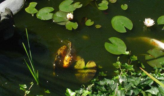 Harrison Heritage House and Cottages: The Magical Koi Pond just steps from the entrance to our room