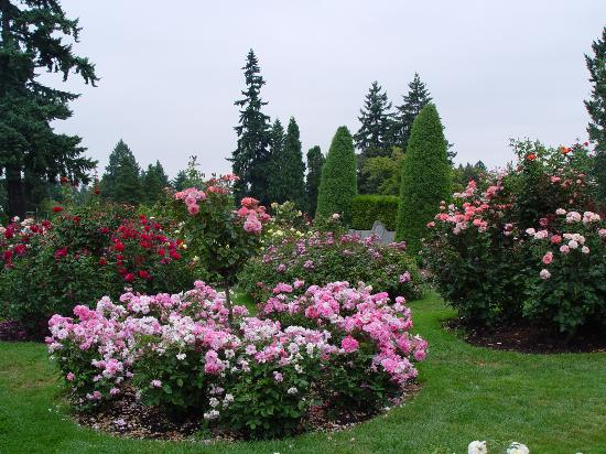 Pink roses at the Rose Gardens - Picture of International ...