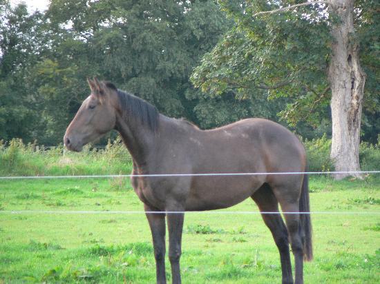 Smithfield House: One of the Farm's Horses