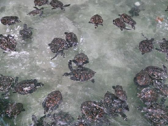 how to get to treasure island fiji