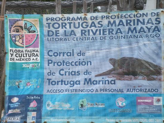Amelie Tulum: Area Sea Turtle conservation program