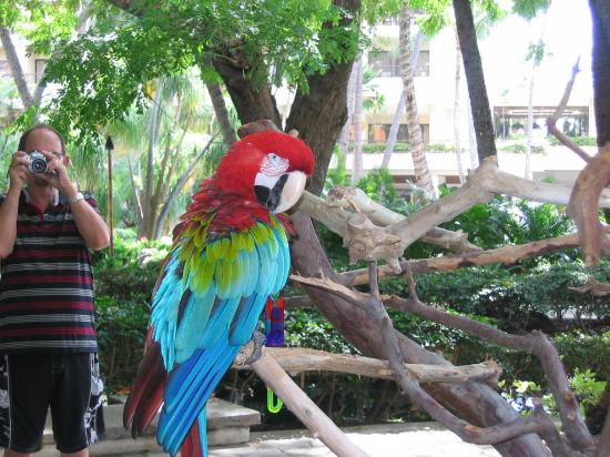 Hilton Hawaiian Villiage Macaw Picture Of Hilton