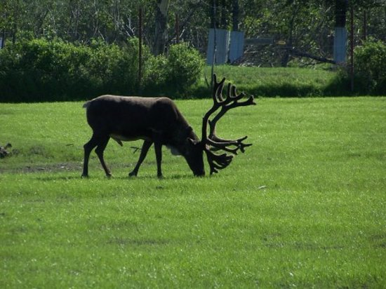 Анкоридж, Аляска: Wildlife
