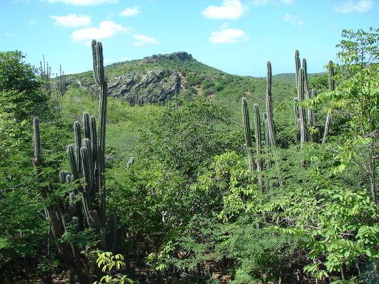 Arid Landscape of Bonaire
