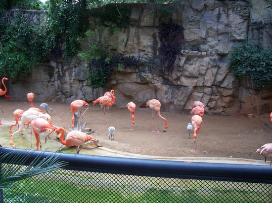 Austin Zoo: The flimingos are one of the first sighs you see to the left of the gates as you walk in.