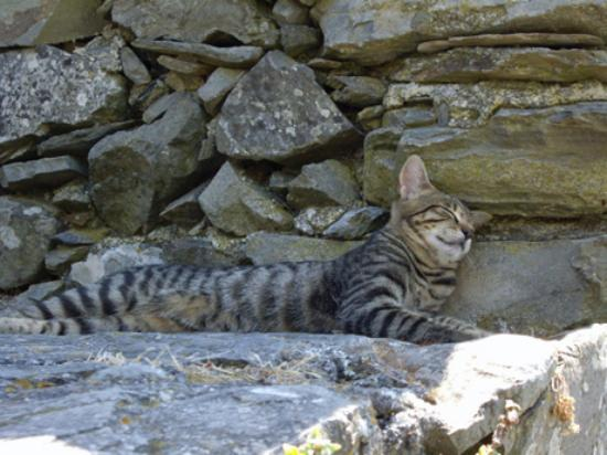 La Torre: One of the locals enjoying a nap