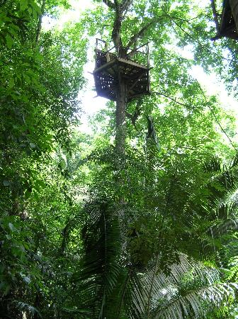Belize Jungle Dome: Zip lining