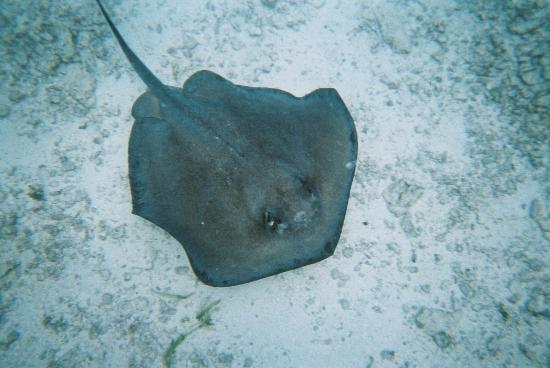 Belize Jungle Dome: Shark Ray Alley