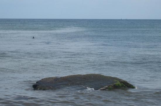 Eastham, MA: One little seal bobbing out in the sea.