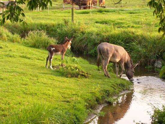 Rayba Acres Farm: Donkey and baby at farm