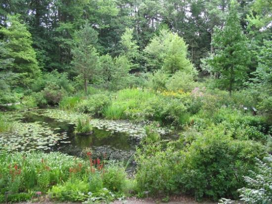 New England Wild Flower Society Garden in the Woods: Lily Pond area as viewed from trail above