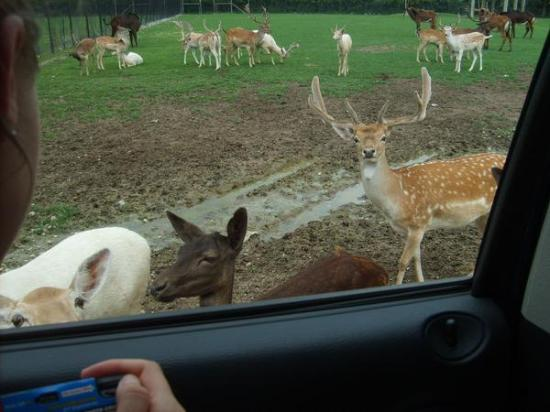 African Safari Wildlife Park: All kinds of wildlife to observe upclose!