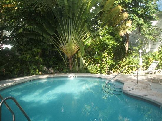 banyan pool foto di the banyan resort key west. Black Bedroom Furniture Sets. Home Design Ideas