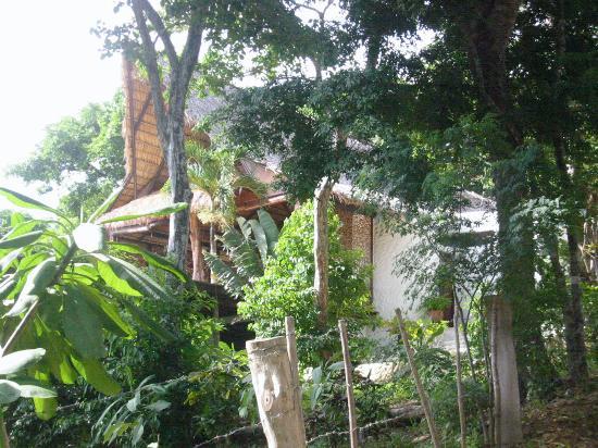 Buena Vista Surf Club : The Main House, through trees