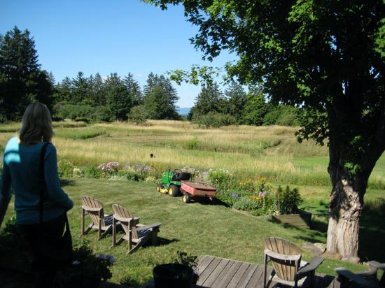 Cornwall Orchards Bed and Breakfast: Back Yard