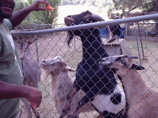 Angels Landing Country Inn and Resort: Petting zoo at Angel's Landing.