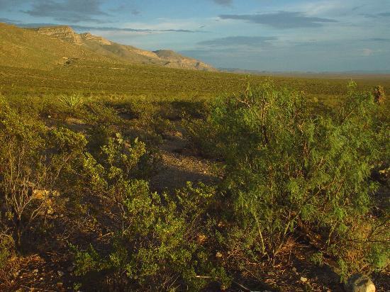 Oliver Lee Memorial State Park : landscape at oliver lee campground