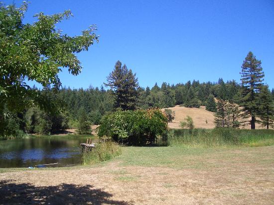 Blackbird Farm: The lake
