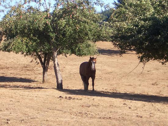 Blackbird Farm : the orchard