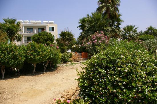 Rododafni Beach Holiday Apartments & Villas: Apartments