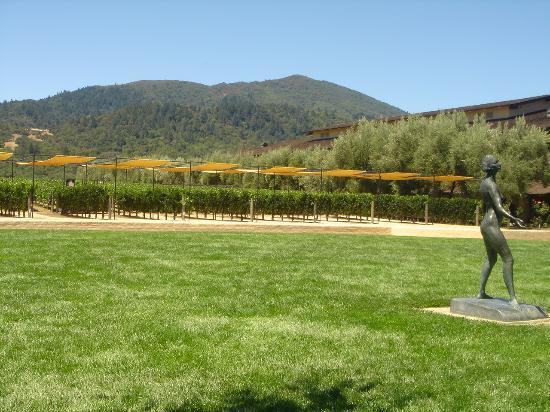 Motel 6 Napa: .....Robert Mondavi winery