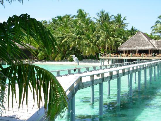 Paradise spa dagenham prices