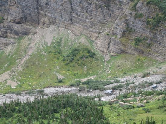 Granite Park Chalet: (need a better zoom on the camera!) Momma Bear and Baby Bear in the distance
