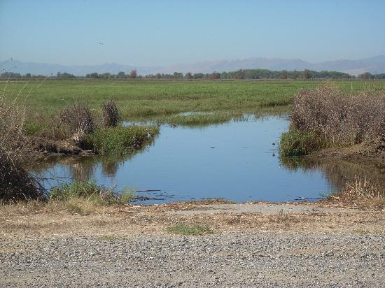 Blue Gum Motel: Marsh at Sacramento Nat'l Wildlife Refuge