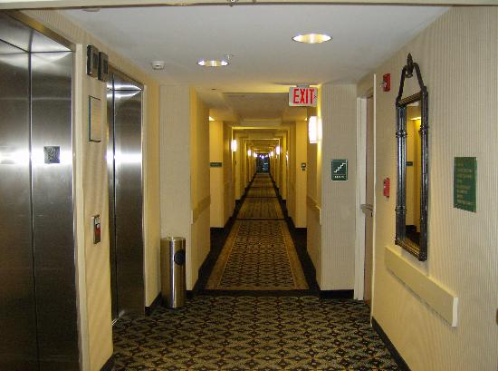 Quality Suites at Lake Wright : Hotel 1st Flr Hallway