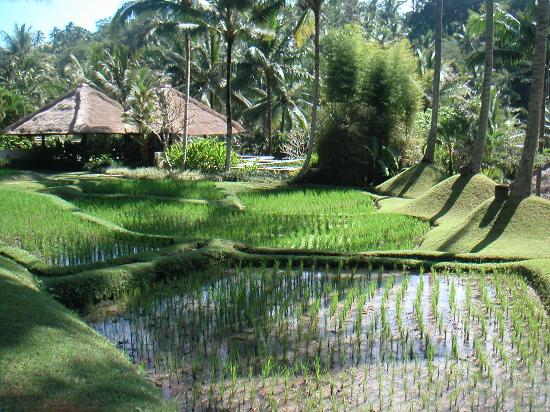 Four Seasons Resort Bali at Sayan: Great landscape