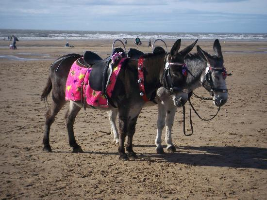 The Big Blue Hotel: Donkeys on the beach