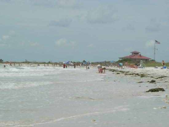 Honeymoon Island State Park: Honeymoon Island Beach