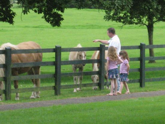 The Dunloe: Horses at Hotel, free horseback riding