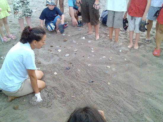 Cavo d'Oro Hotel: Baby turtles going to sea