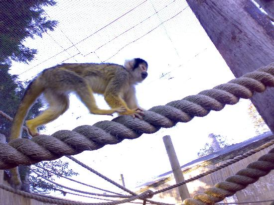 Chessington, UK: Monkey about in the zoo
