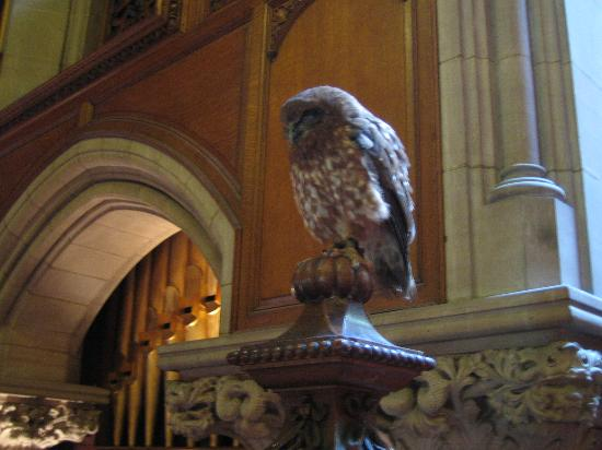 The Carnegie Club at Skibo Castle: The Falconer's owl in the entry hall during breakfast