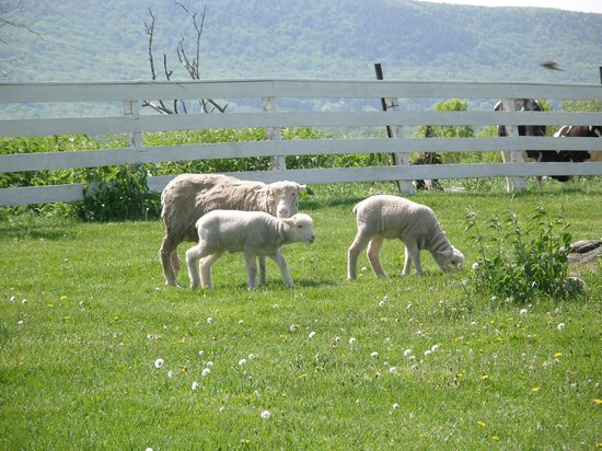 Pittsfield, MA: Lots of Farm Animals