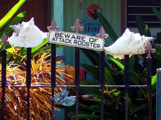 Villa Coral Guesthouse: never actaully saw the rooster