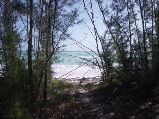 East End Adventures Safari : High Rock Beach