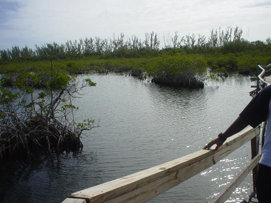 East End Adventures Safari : mangroves