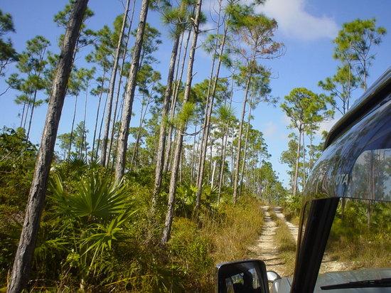 East End Adventures Safari : Pine trails