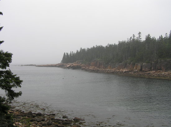 Bass Harbor, ME : Foggy Day on the Ship Harbor Nature Trail