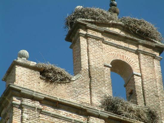 Parador de Ávila: stork nests on local church