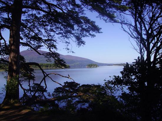 Carriglea House: View of lake from woodland path