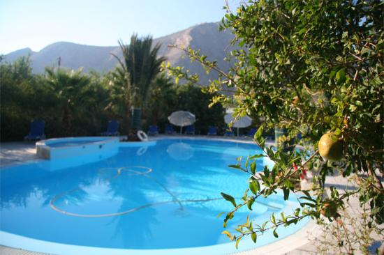 Zorzis Hotel: Pomegranate tree by the pool
